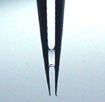 water in tweezers 1
